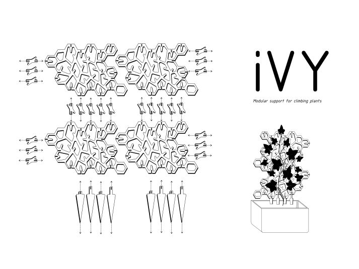 IVY 003